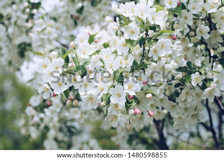 White flowers with tree, Good morning images,Fresh white flowers are most closely associated with purity and innocence. The delicate white blossoms represent honesty, purity, and perfection.