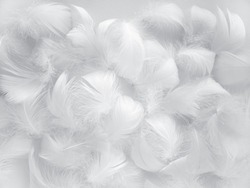 White fluffy bird feathers. Beautiful fog. A message to the angel. The texture of delicate feathers. soft focus.