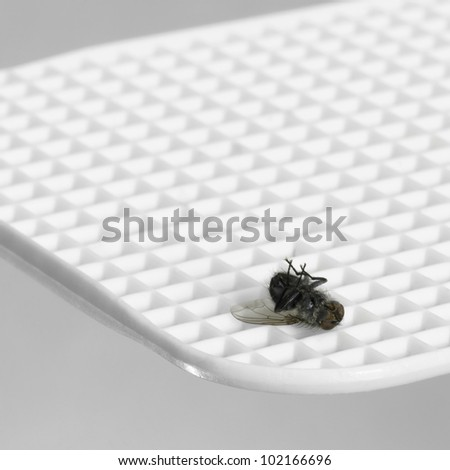 white fly flap and dead supine fly on it, in light grey back