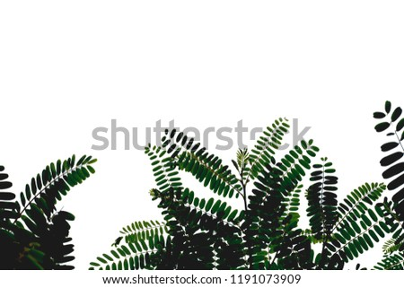 White foliage background and foliage.  #1191073909