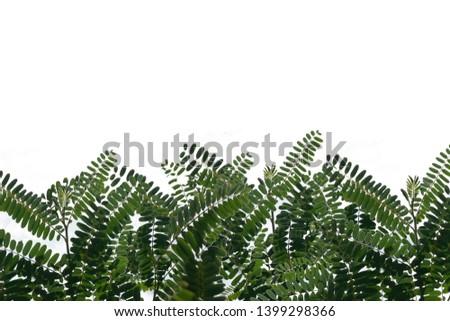 White foliage background and foliage #1399298366