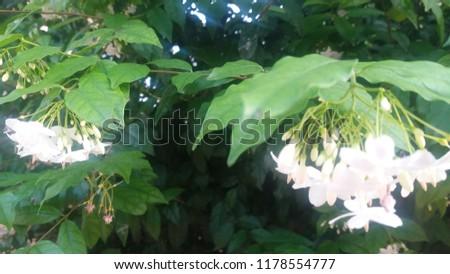 White foliage, foliage background. #1178554777