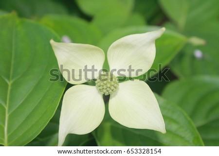 Free photos four petal flower avopix white four petal flower 653328154 mightylinksfo