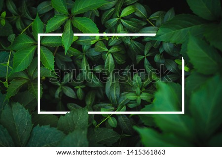 White frame on fresh green leaves background #1415361863
