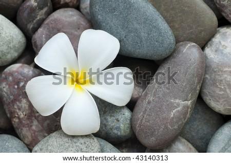 White frangipani and therapy stones.