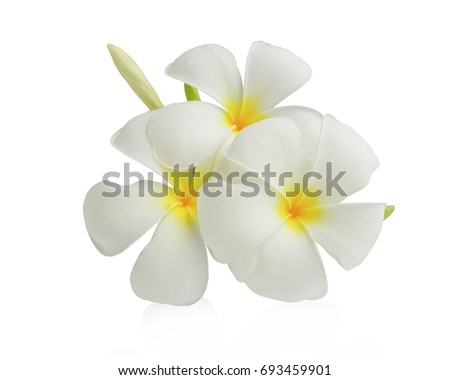 White frangipani flower beautiful tropical flower isolated on white background. This has clipping path.