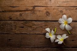 White Frangipani on wood background  , Plumeria Flower