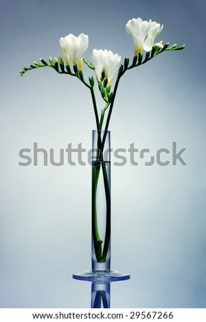 Freesia Flower Arrangements
