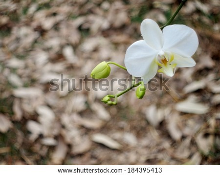 white fresh lovely orchids under natural lighting with romantic bokeh background of brown falling leaves on the floor.