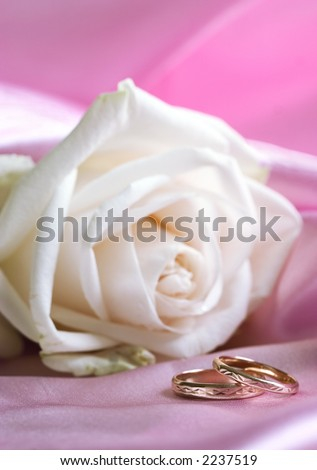 White fresh rose with wedding bands on pink background