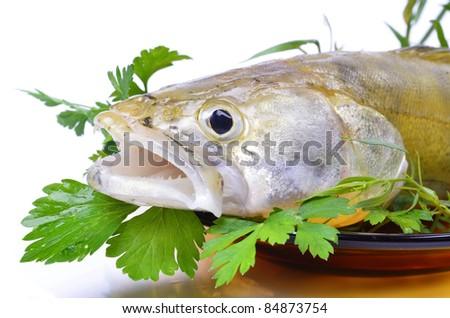 White freshwater predatory fish close up green leaf for Predatory freshwater fish