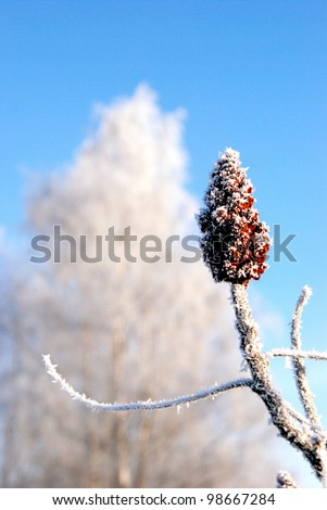 White frost on the plants. Winter art.
