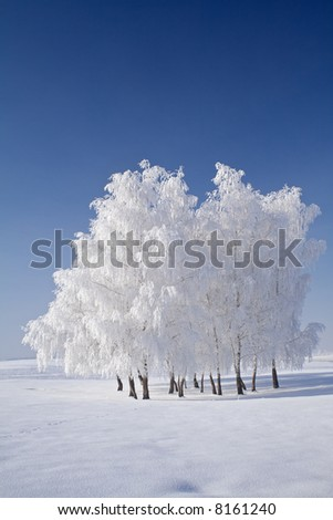 White frost tree cluster in the frozen winter landscape with spectacular blue skies