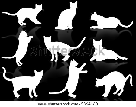 white funny cats silhouette in typical poses stock photo