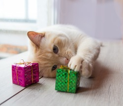 white funny playful young cat playing with Christmas toys, for Christmas.