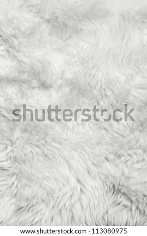 White fur background. Close up