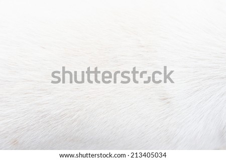 white fur close up