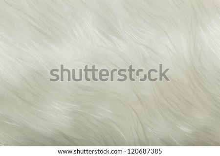 white fur closeup