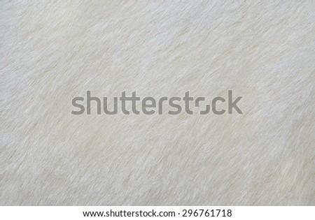 white fur texture background. skin