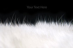 White fur texture Closeup of beautiful. Useful as background