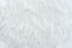 white fur texture for background