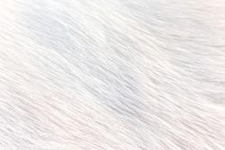 white fur texture full background.