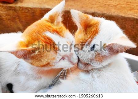 White Furry two Sibling Kitten enjoying Day #1505260613