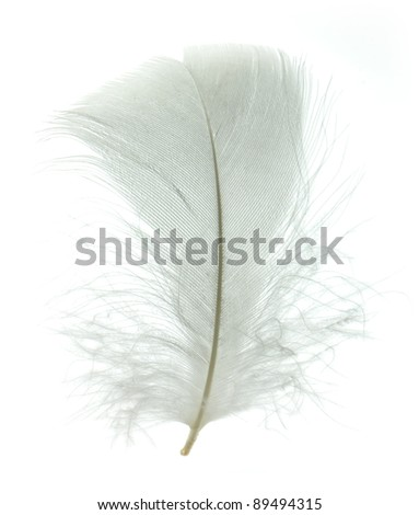 White goose feather isolated on white background