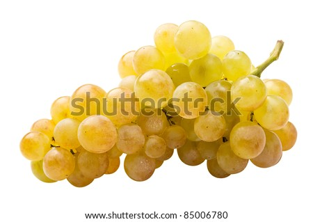White grape (riesling) fully isolated
