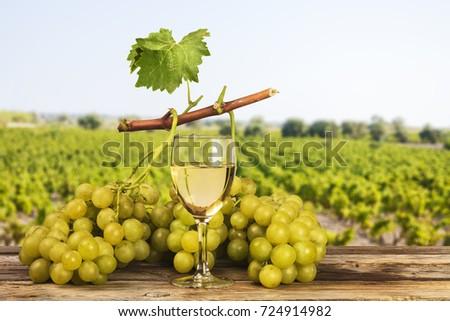 White grapes landscape vineyard background #724914982