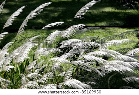 White grass. White grass in the green meadow. #85169950