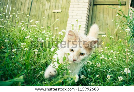 White green-eyed cat behind grass