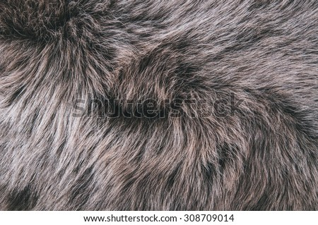 White Grey, Dark Brown Wolf Fox Fur Natural, Animal Wildlife Concept and Style for Background, textures and wallpaper. Close up Full Frame.