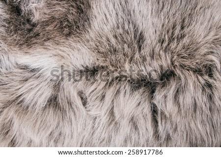 white grey wolf fox fur natural ...