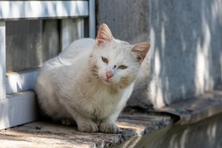 White grimy cat with a sad face sits on a street windowsill