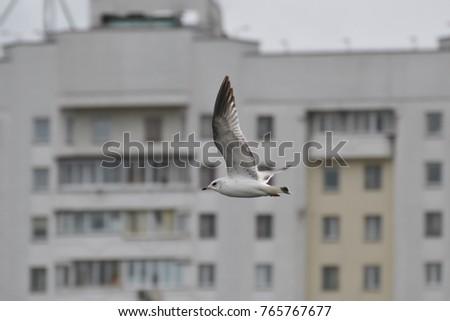 White gull flying under the white sky during daytime in city #765767677