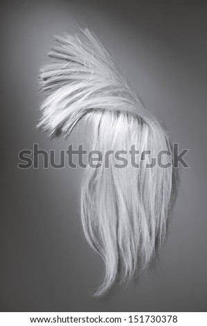 white hair on a gray background