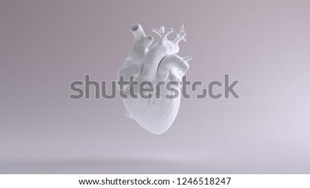 White Heart Anatomical 3d illustration 3d render