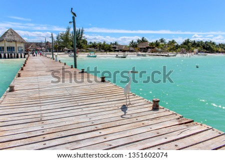 White Heron/Garza standing on a pier in the Caribbean #1351602074