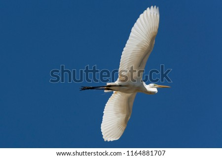 White Heron Stort  Flying In To The Blue Sky on Lake of Pampulha. Belo Horizonte in State of Minas Gerais #1164881707