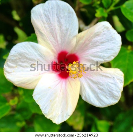 Free photos Pink hibiscus flower with red center and red and yellow ...