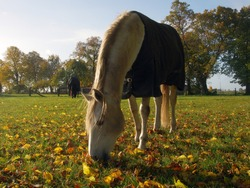 White horse covered with a blanket on a sunny autumn day