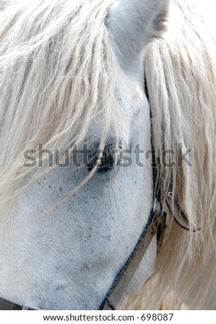 White Horse Face close-up - stock photo