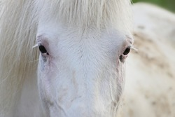 white horse face front view