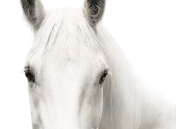 White horse head eyes white background