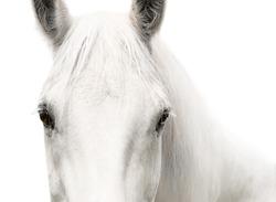 White horse head eyes white background