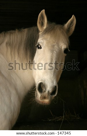 White horse head in black background