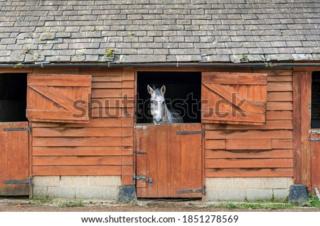 White horse in a stable looking out over half open dutch door. Foto stock ©