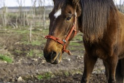 White horse in stable, wild mammal animals, equestrian