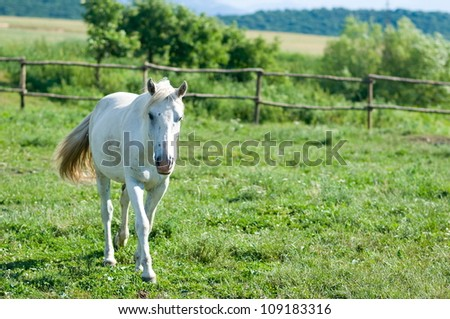 white horse in summer